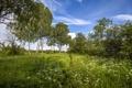 Картинка лето, деревья, пейзаж