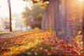Картинка осень, забор, улица