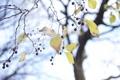 Картинка листья, природа, дерево