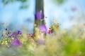 Картинка трава, цветы, дерево, растение, дымка