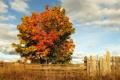 Картинка облака, осень, трава, забор, дерево