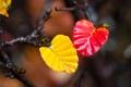 Картинка листья, осень, краски, ветка, вода