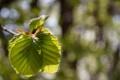 Картинка листья, макро, свет