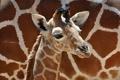 Картинка мальчик, маленький, жираф, boy, baby, giraffe, little