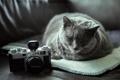 Картинка лежит, фотоаппарат, кошак, котяра