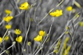 Картинка природа, цветы, цвет