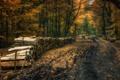Картинка дорога, лес, дрова