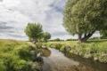 Картинка природа, река, деревья