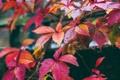 Картинка листья, осень, краски, ветка, цвет
