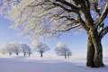 Картинка зима, снег, Природа, деревья, иней