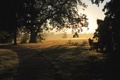 Картинка дорога, лес, природа, тень, утро