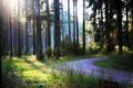 Картинка дорожка, трава, солнце, в лес, тропинка, тени, деревья
