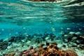 Картинка рыбы, отпуск, Мальдивы, Maldives, хочу обратно