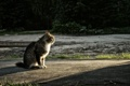 Картинка закат, кот, сидит, Паша Иванов, photographer, глядит