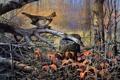 Картинка осень, деревья, птица, сухие, живопись, осенний лес, валежник