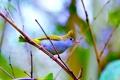 Картинка природа, птица, цвет, ветка, перья