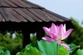 Картинка цветок, небо, макро, лист, фото, лотос