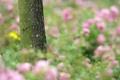 Картинка поле, макро, природа, дерево