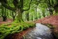 Картинка деревья, природа, речка