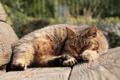 Картинка кот, сон, лавочка, коричневый, улича
