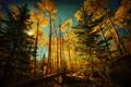 Картинка осень, лес, небо, деревья, камни