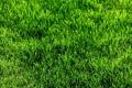 Картинка трава, газон, зелёный