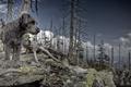 Картинка природа, фон, собака