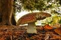 Картинка осень, лес, листья, макро, дерево, гриб