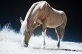 Картинка природа, стиль, фон, конь