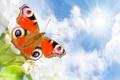 Картинка небо, солнце, облака, лучи, природа, бабочка, белые