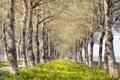 Картинка пейзаж, деревья, лето