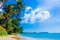 Картинка море, пляж, небо, облака, природа, тропики, пальмы