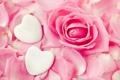 Картинка цветок, розовый, роза, сердца, лепестки, бутон, сердечки