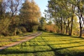 Картинка лес, трава, деревья, дорога
