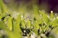 Картинка трава, капли, макро, свет, роса, игра