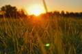 Картинка природа, утро, свет, трава, солнце
