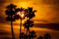 Картинка небо, солнце, облака, закат, пальма, силуэт