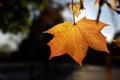 Картинка осень, листья, свет, природа, light, nature, autumn