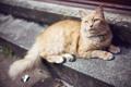 Картинка кот, рыжий, шерсть