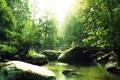 Картинка лес, река, Природа, Pyatkov_Denis