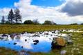 Картинка облака, трава, деревья, камень, небо, отражение, лужа